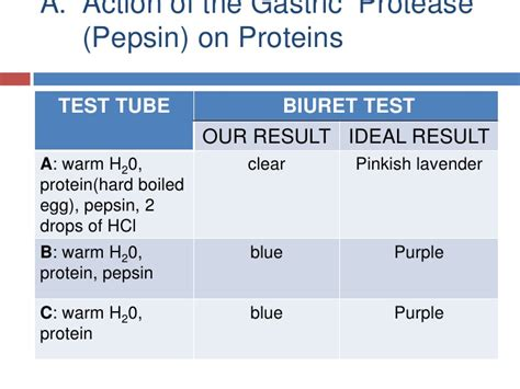 protein digestion lab picture 9