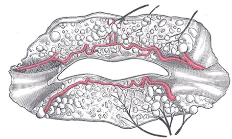 lips and nerve endings pus picture 2