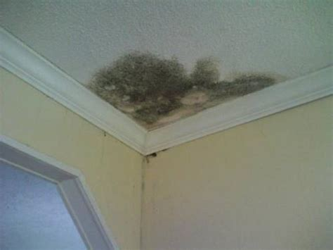 types of mold or fungus that enter a picture 4