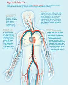 research on does body positioning change your blood pressure picture 5