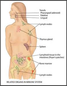 autoimmune axillary pain picture 14