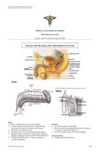 jakol i male reproductive systems picture 17