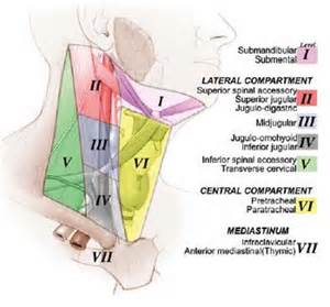 level 2 lymph nodes in thyroid cancer picture 10