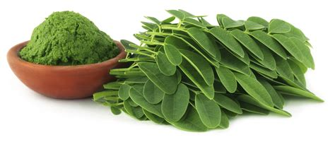 can moringa herbs cure h picture 14
