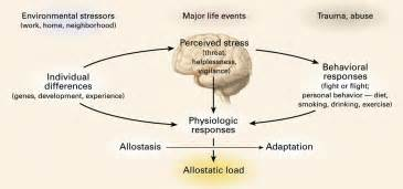 affects of aging on the adrenal cortex picture 13