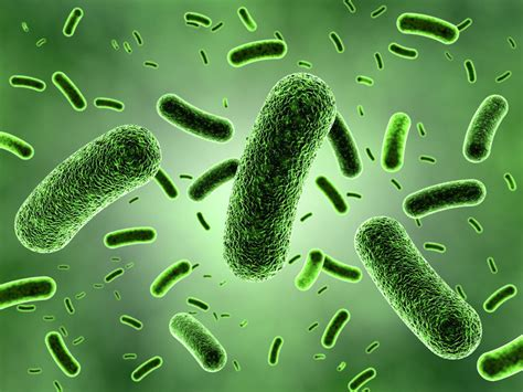 bacterial picture 7