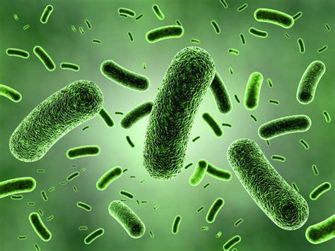 airborne probiotic picture 15