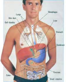 location of liver in human body picture 11