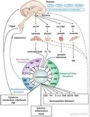 prolactin sleep picture 3