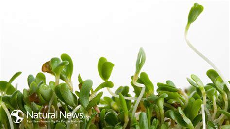 alfalfa chemtrails picture 1