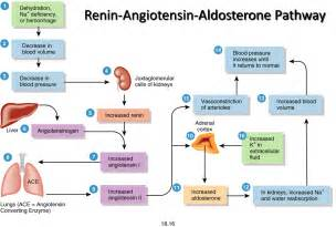 head injury and blood pressure and aldosterone release picture 17