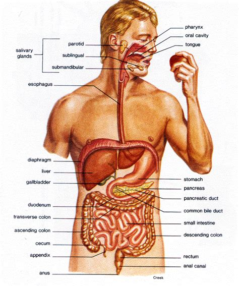 gall bladder cancer symtoms picture 15