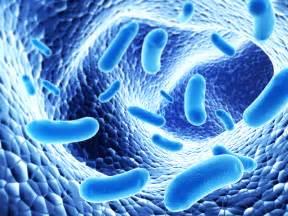 probiotic bacteria picture 14