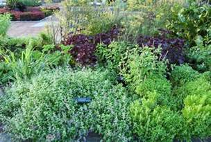 diane galloways herbal garden picture 6