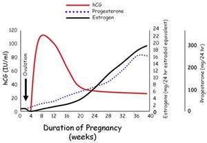 hcg levels during pregnancy picture 3