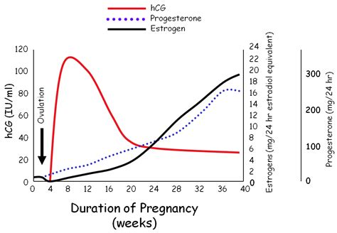 hcg levels during pregnancy picture 4