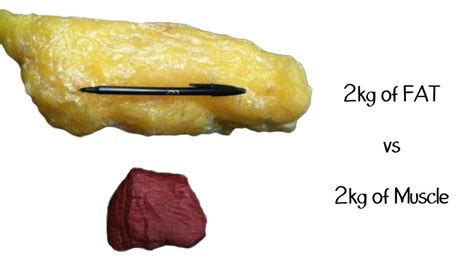 fat weight compared to muscle picture 10