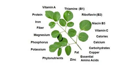 can moringa cure loss of libido picture 5