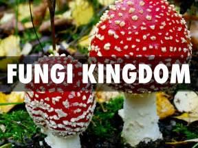 fungi kingdom picture 6