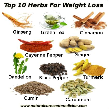 cheap herbal medicine for weight loss picture 3