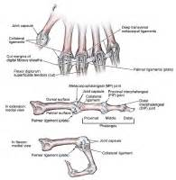 mp joint hand picture 5