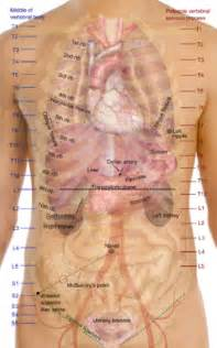 human liver location picture 14