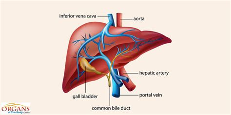 what do liver problems cause over grown beak picture 4