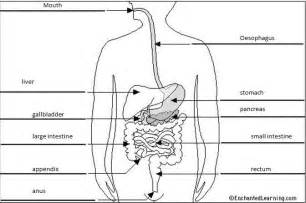 digestive system 8 parts picture 3