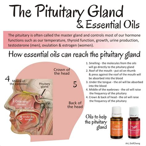 fibromyalgia and thyroid disease picture 10