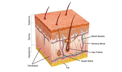 collagen and hgh picture 9