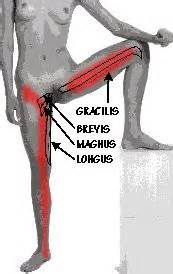 injury to the hip abductor muscle picture 6