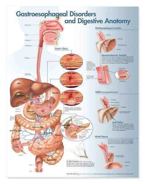 digestion symptoms picture 6
