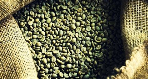 gardicia and green coffee bean picture 5