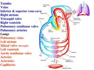 best for blood flow picture 7