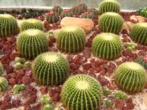 cactus picture 13