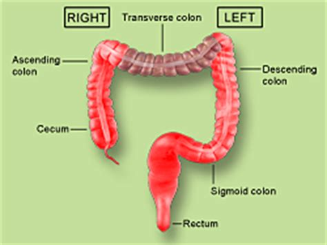 diagram descending colon picture 5