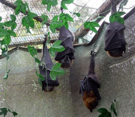 pictures of bats sleeping picture 11