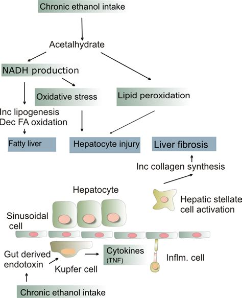 liver cirrhosis stages picture 3