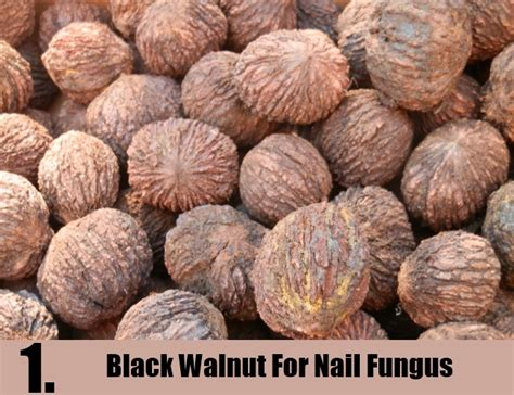 black walnut powder for nail fungus picture 1
