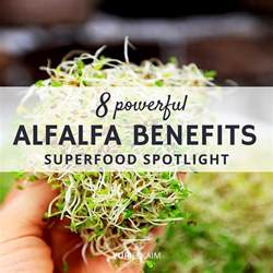 homeopathic alfalfa-health benefits picture 10