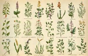 ayurvedic books .pdf picture 11