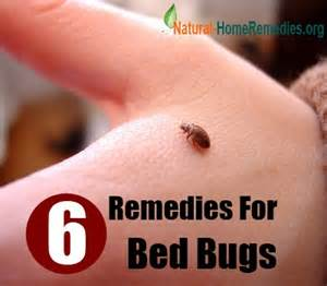 ayurvedic treatment of bed bugs picture 3