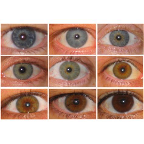 acai berries to lighten eye picture 10