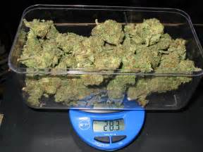 weed wholesale picture 7