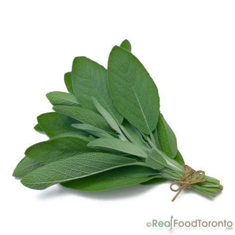 is diesel organic herbal salvia? picture 5