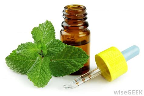 peppermint oil picture 1