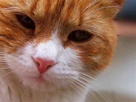 feline skin disorders picture 6
