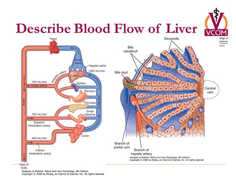 things that promote blood flow to colon picture 6