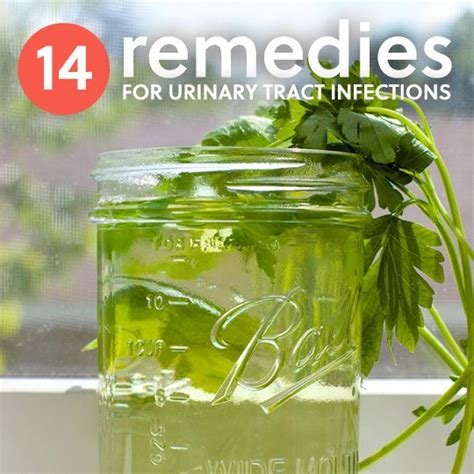herbal treatment uti picture 6