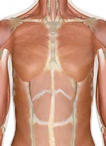 what dysfuncting organ can cause breast bone back picture 2